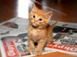 Кот учёный. Очень любит сидеть и спать на свежих газетах. (©A.Neshin)