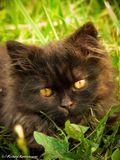Случайно нашёл эту живность на даче в траве, дочего милый и фотогеничный тип оказался!