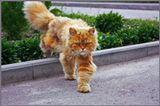 Кот с соседней улице. Его зовут Клёпа, ему 3 года =)