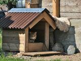 """Этот сурьёзный Кот живет в деревне. И прослыл он своим, достаточно крутым нравом. Хозяин посадил его на привязь после неоднократных попыток нападения на людей, которых он царапал. Вот и """"отбывает срок"""", бедняга..."""