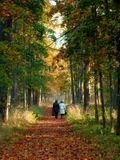 Осень. парк
