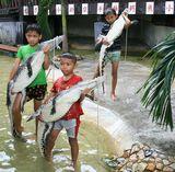 Таиланд, Самут Пракан, Крокодиловая ферма, малое крокодилье шоу, 05.10.07.