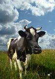 Sony Cyber Shot DSC-H9ISO 100 1/400 f/5,6И у нас на тучных лугах пасутся симпатичные коровы.