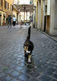 На одной из улиц Рима
