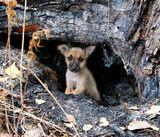 К сожалению, действительно все очень  печально. Этот щенок- бедолага, и еще трое (они, увидев меня, отбежали в сторону) живут далеко от людей,  в лесу,  в сгоревшем дупле дерева,  с полкилометра от трассы.  Наверное, кто- то решил таким способом избавиться от них. Что с ними будет дальше. Скоро холода. Как все трагично.