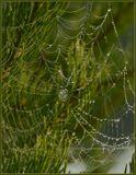 Продолжу тему про паутинки и росу. Всю эту красоту снимал на берегах УНЖИ Кострома.