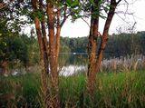 Загорские Дали, река Веля