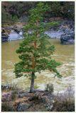 Снято в пасмурный день. природа,дерево