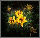 Макро.природа,цветы