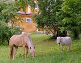 Дорога,дом,лошадки,доверие