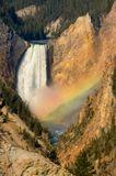 Каньон Йеллоустоун. Нижний водопад. Солнце только что осветило каньон до дна. И зажгло радугу на водопаде