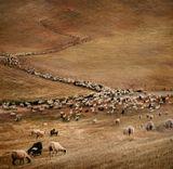 Крит, горы, овцы...