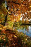 фото, пейзаж, осень, парк, Москва