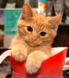 Мой  рыжий кот Фёдор, главный на этом празднике жизни... (©A.Neshin)