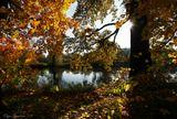 парк, осень, октябрь, листья