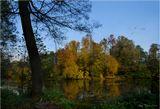 ОсеньКузьминский лес