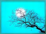 Наверное это сгусток прохлады - полная  луна...            Тейсицу (1609-1673)  Небо, луна, ветка... Что еще нужно для Хайку? :)