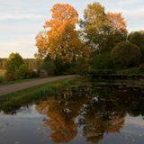 осень листва отражения
