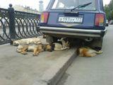 Лето.Столица.собаки
