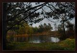 Ноябрьский лучик солнышка коснулся тонкой ледяной корочки лесного озера, теплой кисточкой света, окрасив золотом берег .Вот такое оно было летомhttp://www.lensart.ru/picture-pid-18ccd.htm?ps=18