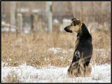 """Увидев эту собаку, почему-то сразу прочитал в глазах и позе вопрос: """"Почему опять эта длинная зима?"""""""