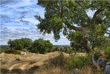 Португалия, плантация пробковых дубов в провинции Алентежу, сентябрь 2008 г.