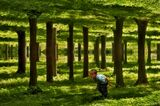 В этом волшебном лесу приходится ходить согнувшись. Продолжение темы, начатой позапрошлой осенью: www.lensart.ru/picture-pid-ee22.htm?ps=18