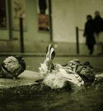 Франция. Париж. Монмартр. Утреннее купание голубей