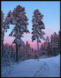 """Тронут вершины деревьевНежные краски заката.О. как же прекрасны мгновеньяПокоя средь зимнего """"сада""""!----------------------------------------Свежая фотография из сибирского леса. Снег по пояс... Бурятия."""