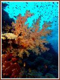 Снимок сделан на фотосафари по Красному морю. Хочется поздравить всех фото-леди с наступающим праздником.