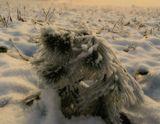 Поздравляю всех с Рождеством   =))  Снег у нас в большом дефиците... а вчера... неожиданно Небесная Канцелярия распорядилась выдать =) так что Рождество встретили белое...сейчас от снега ничего не осталось...успела снять это =)) Поздравляю всех !!!  Весела Коледа  и честита Нова Година =))