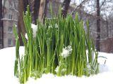 Пусть Вам улыбается солнце и растают снега в Ваших сердцах! Улыбайтесь сами и радуйтесь жизни!!! Весна!!!