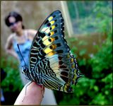 Butterfly farm near Vatamu