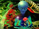Земля.Заповедная иланета на окраине Галактики Млечный Путь.Только там растёт необыкновенный по красоте цветок,названны Чудом Вселенной.Редкие экспедиции могут привезти на родную планету один экземпляр этого растения.Земляне даже не подозревают,каким сокровищем они обладают...