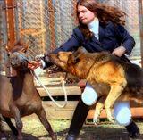Ни одно животное не пострадало, не считая прокушеной руки хозяйки...