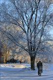 г. Вологда, январь 2008 г.