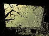 на границе со штатом Гоа нам показали развалины (насколько мы смогли понять местного проводника) испанской крепости, которой около 600 лет. Место не экскурсионное,совершенно фантастическое - там сквозь каменные стены проросли деревья. Это - фрагмент этой фантастики.