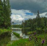 Место впадения лесной речки в озеро.
