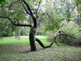 деревья как люди
