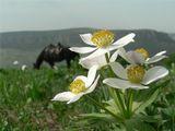 Цветы, горы, конь