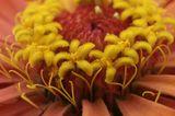 Прсто фотосъемка цветов в саду, удачно или нет судить вам мои любезные зрители. ISO200, 1/80, F13 Циния
