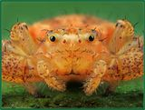 """Необычное выражение """"лица"""" паука - кажется,что ему рот зашили"""