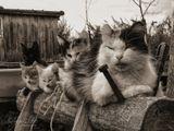 Россия, р.Татарстан, Чистопольский район, деревня Бахта, там проживают особо опасные кошки...))