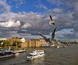 Кормление чаек с Тауерского моста в Лондоне...
