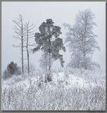 «Сколько снегов уже видели, Но сердцем не изменились они –Ветки сосен зелёные!»Стихи: Басё;  переводчик: В. МарковаСнято в тот же день, что и http://www.lensart.ru/picture-pid-1aa77.htm?ps=18 , но вечером, когда пошел снежок... (если нетрудно, то через F11... спасибо!)