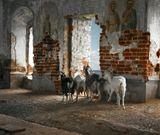 тверская область, весьегонск, в 1937 году рыбинское водохранилище остановилось в пяти метрах от стен казанской церкви...