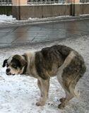 На паперти у церкви обитает собака. Пожилая, одинокая, но не голодная до хлеба!Холодно ей, хоть и лохматая! Скорее бы весна!