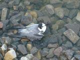 свежесть моря влечет не только людей, но и птиц