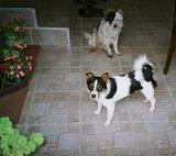 Два чувара на прaгу дома свог!!!