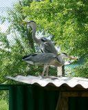В Большереченском зоопарке - единственном сельском зоопарке России